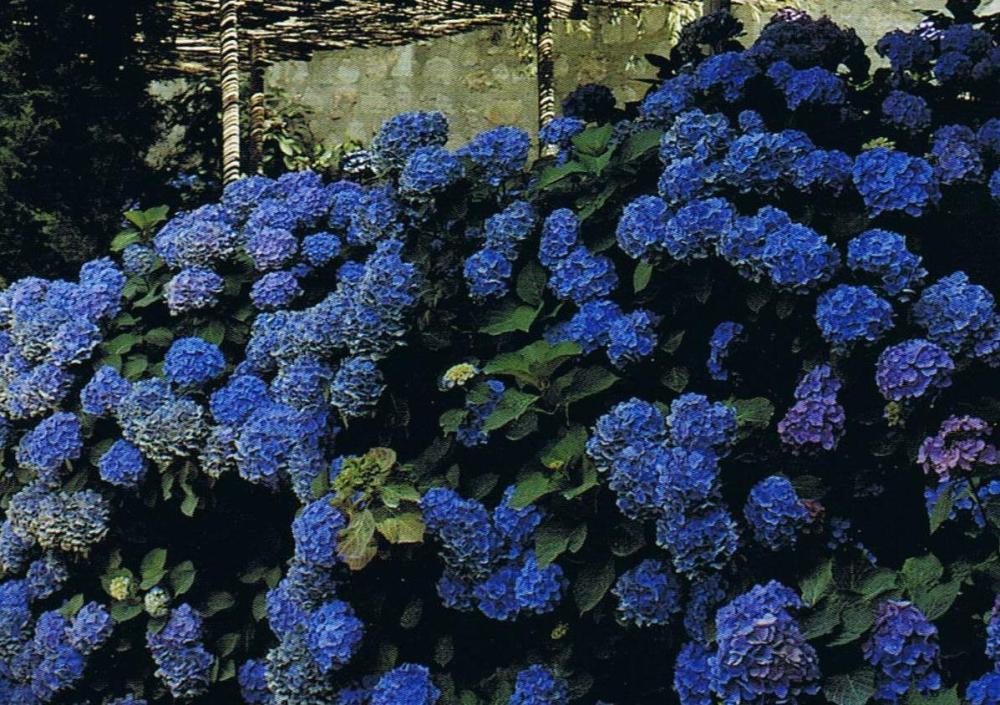 Janet de Botton Voque Living Houses Gardens People.4