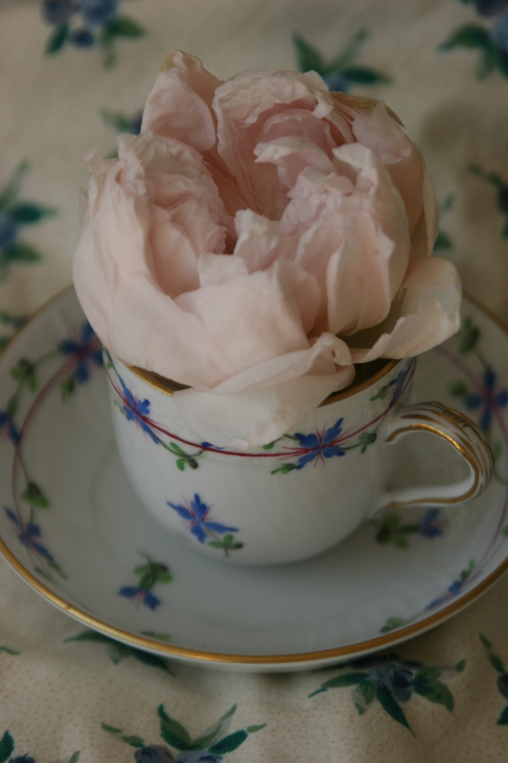 Antique French rose
