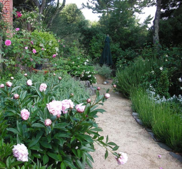 Peonies, roses and lavender garden