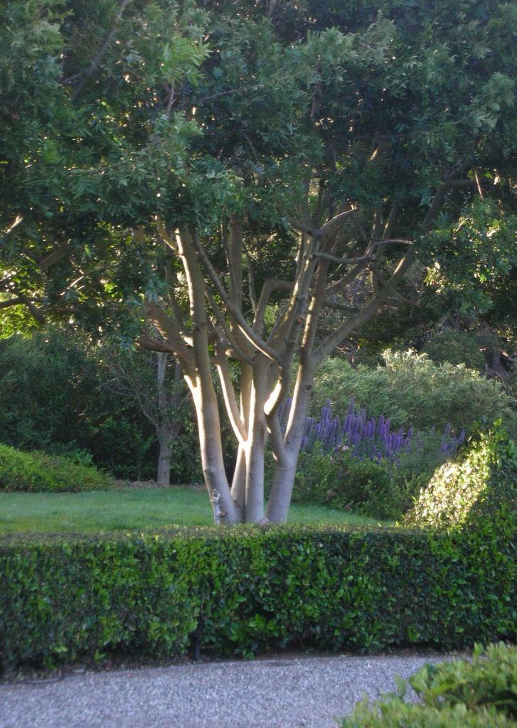 Montecito gardens