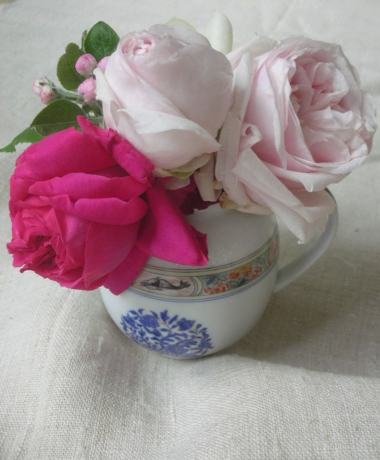 antique French garden roses