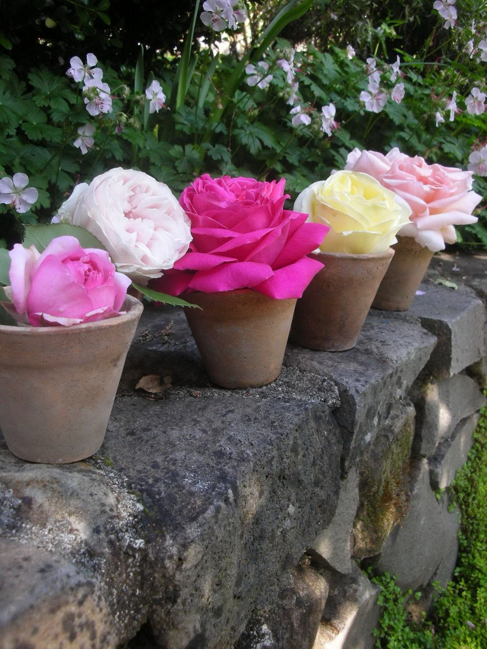 Antique French Roses