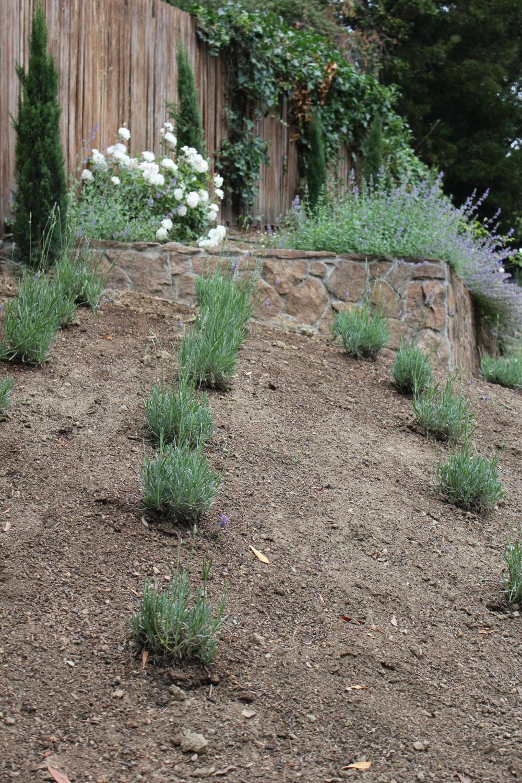 lavender hillside Trouvais