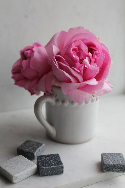 Trouvais December roses