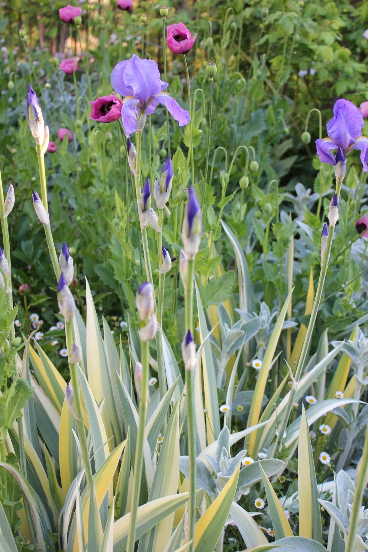 Garden border Trouvais