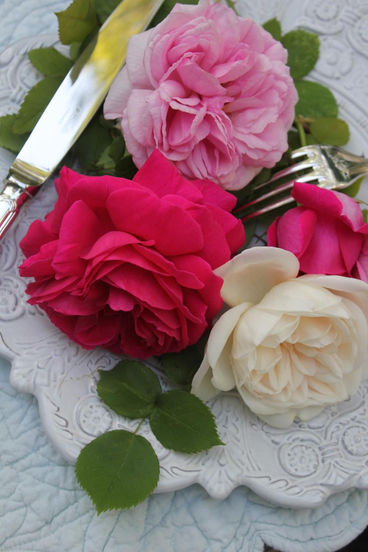 Feeding roses