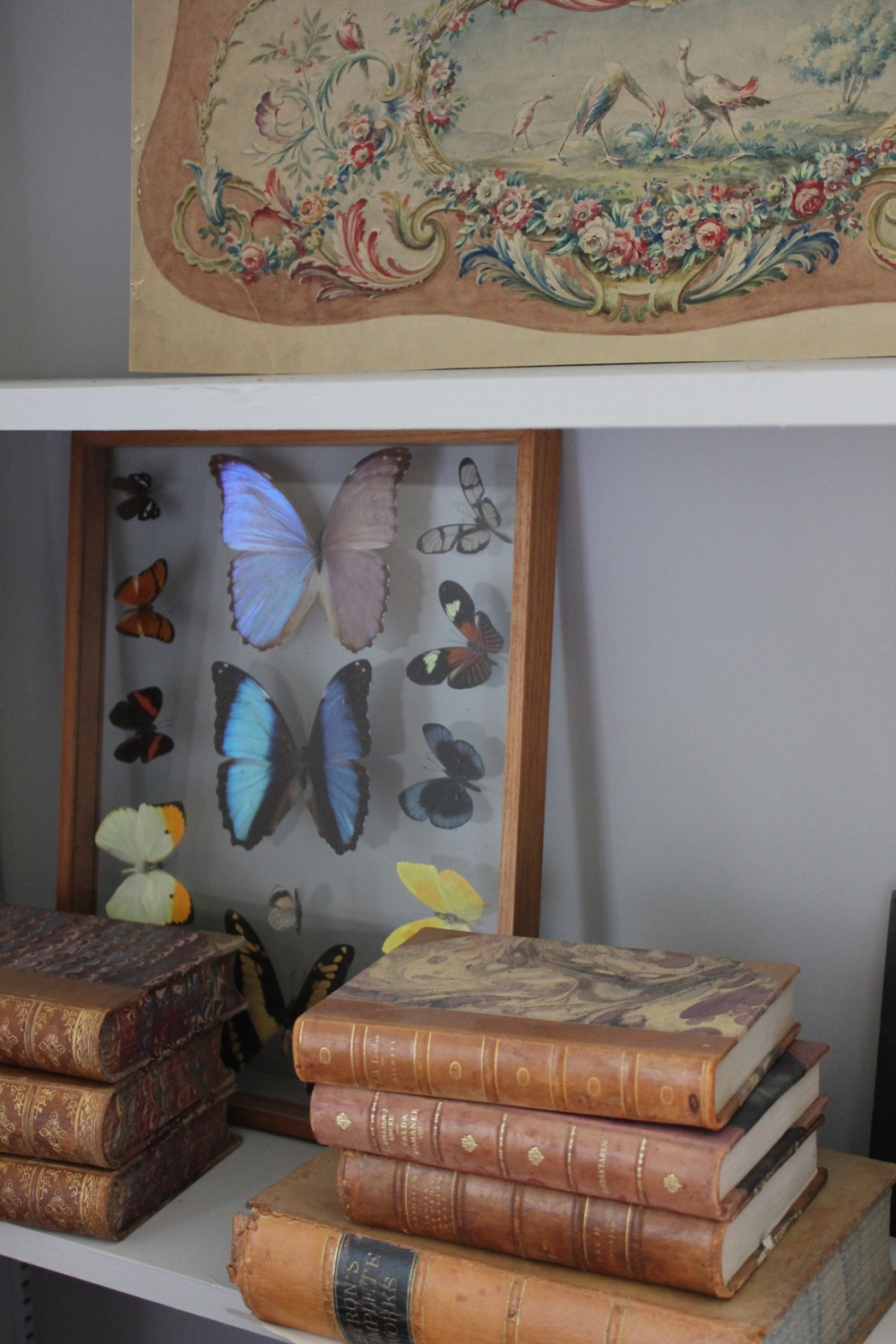 Old books and butterflies