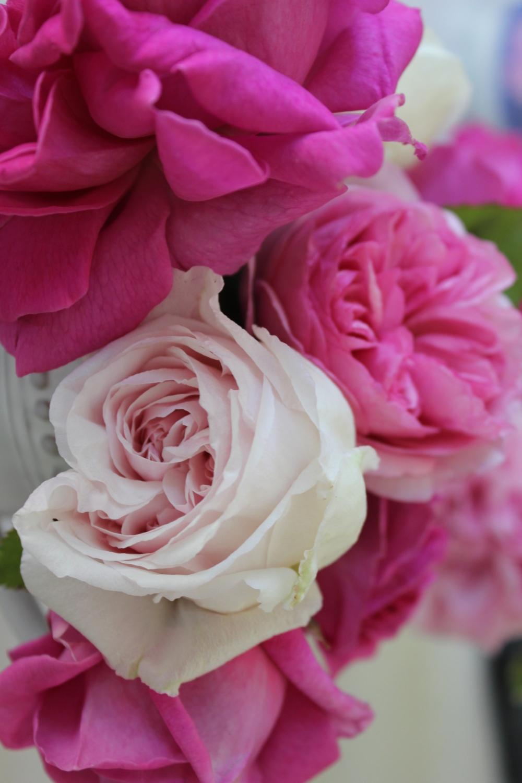antique garden roses