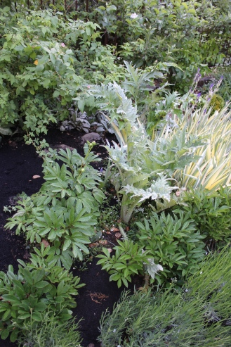 Artichoke in the Spring border