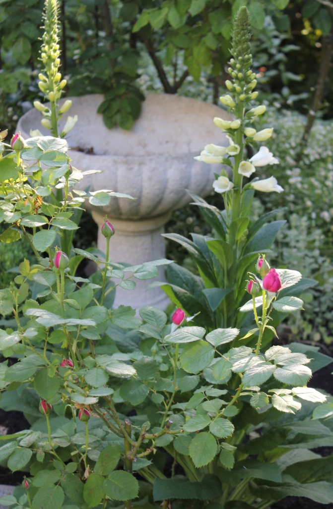 Foxgloves and roses